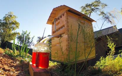 Crean panal para extraer miel sin picaduras