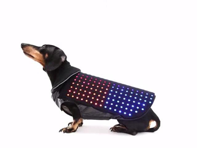 perro4